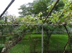 Селски имот с.Бял извор
