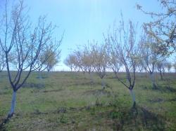 Земеделска земя с.Гарваново