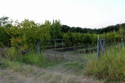 Земеделска земя с.Стамболийски