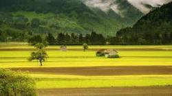 Земеделска земя с.Тънково