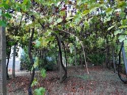 Селски имот с.Елена
